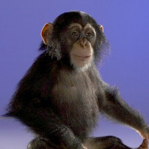 chimp_kenzie_color_038