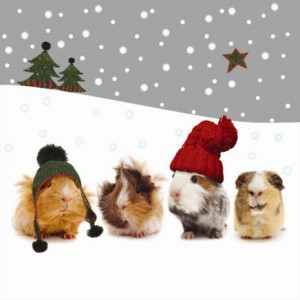 CHRISTMASGUINEAPIGS
