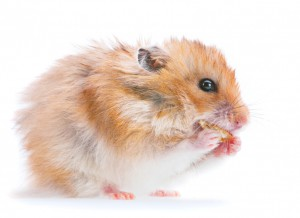 LD 102 Rodent Liquid Diet